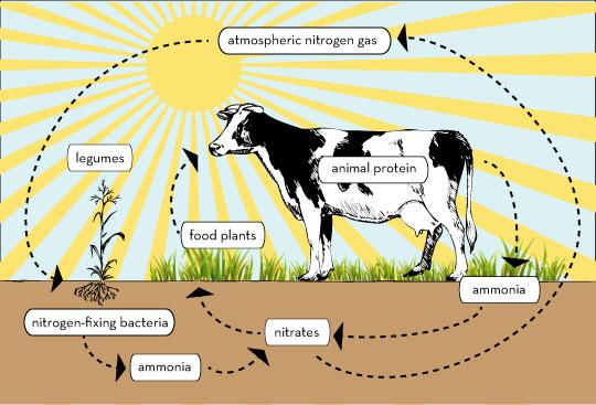 سیکل تولید نیتروژن