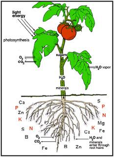 عناصر عذایی مورد نیاز گیاه