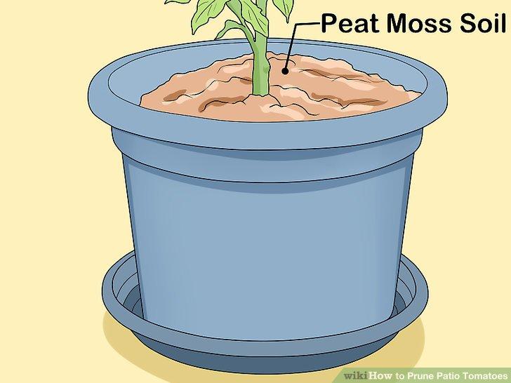 آموزش هرس شاخه هاي گياه گوجه فرنگي مرحله 4
