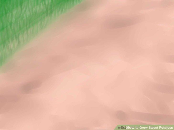 Image titled Grow Sweet Potatoes Step 10