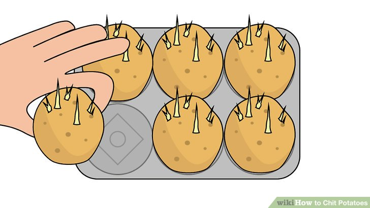 Image titled Chit Potatoes Step 4