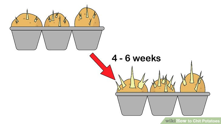 Image titled Chit Potatoes Step 6