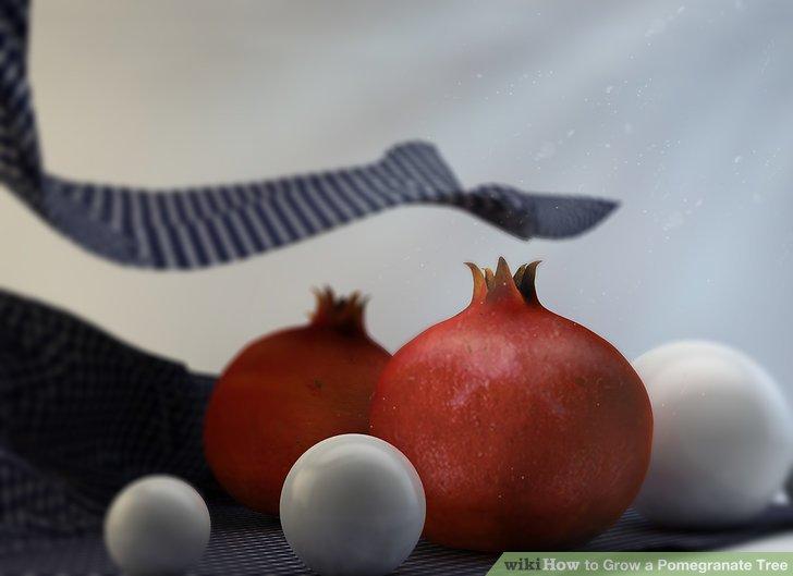 آموزش کاشت درخت انار مرحله ی 1