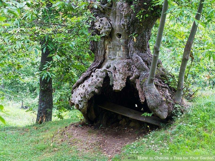 آموزش انتخاب درخت برای باغچه مرحله 4