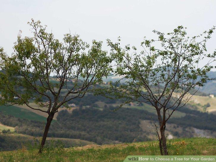 آموزش انتخاب درخت برای باغچه مرحله 5