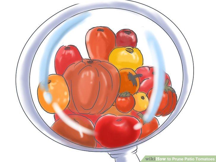 آموزش هرس شاخه هاي گياه گوجه فرنگي مرحله 1