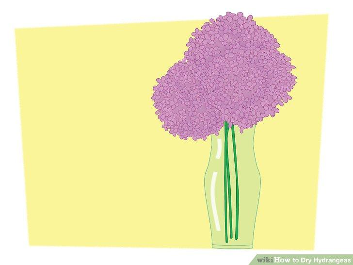 خشک کردن گل ادریسی 12