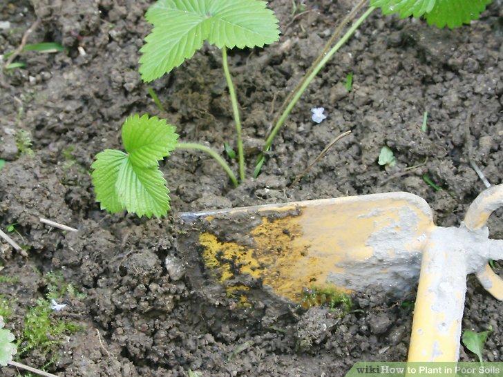 آموزش کاشت کاشت گیاهان در خاک های فقیر 6