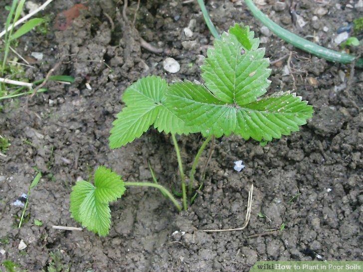 آموزش کاشت کاشت گیاهان در خاک های فقیر 7