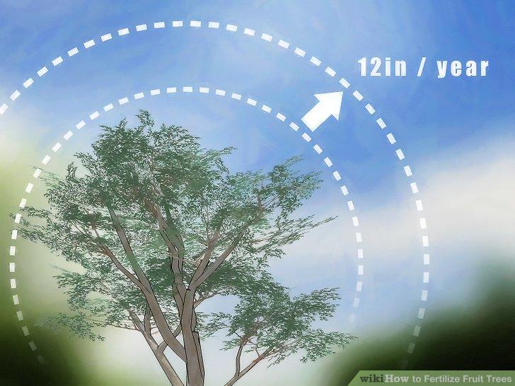 آموزش کود دادن به درختان میوه مرحله 12