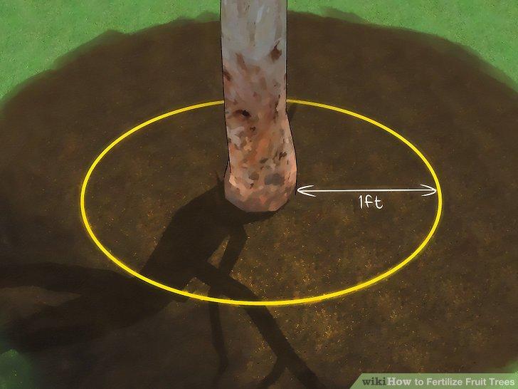 آموزش کود دادن به درختان میوه مرحله 6