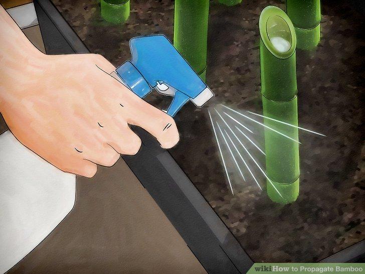 Image titled Propagate Bamboo Step 8