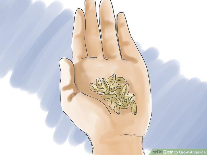 آموزش کاشت گلپر مرحله 1