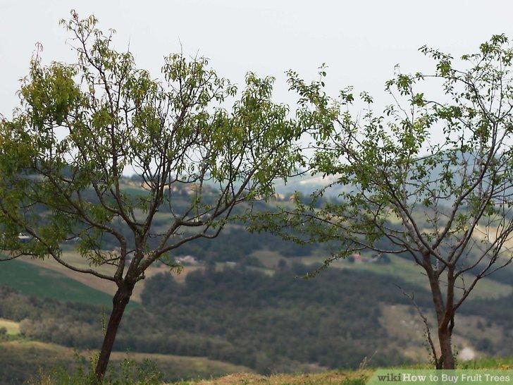 آموزش خرید درختان میوه مرحله 10