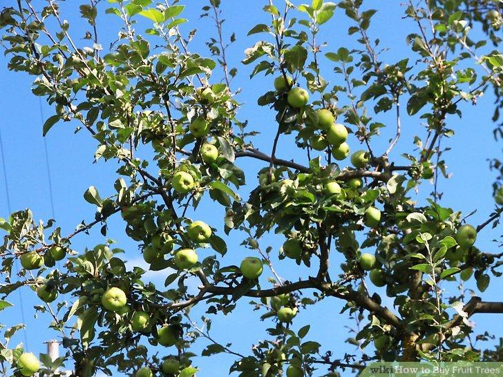 آموزش خرید درختان میوه مرحله 6