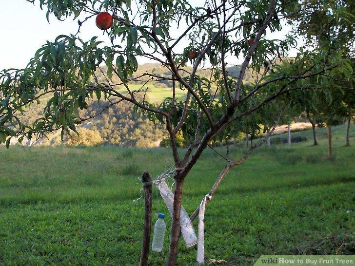 آموزش خرید درختان میوه مرحله 9