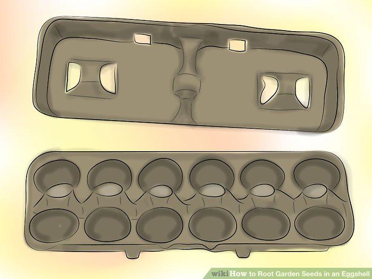 ریشه دار کردن بذر در پوست تخم مرغ 1