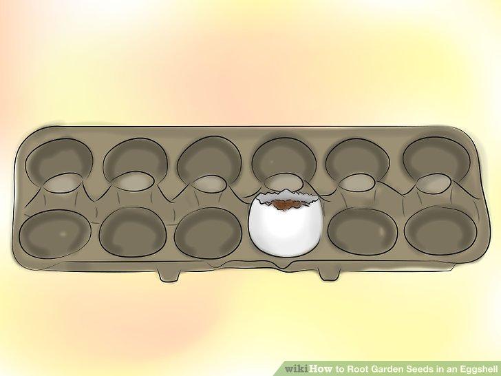 ریشه دار کردن بذر در پوست تخم مرغ 11