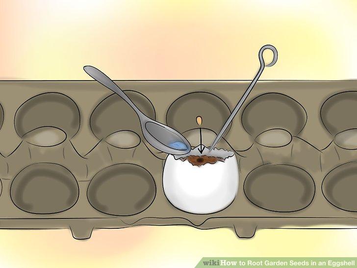 ریشه دار کردن بذر در پوست تخم مرغ 12