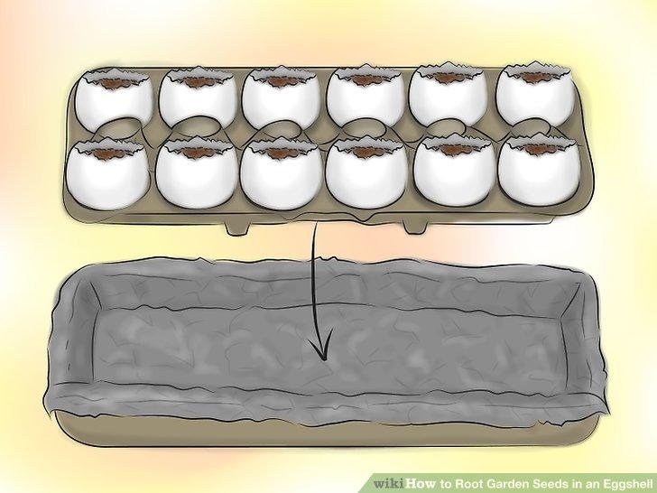 ریشه دار کردن بذر در پوست تخم مرغ 14