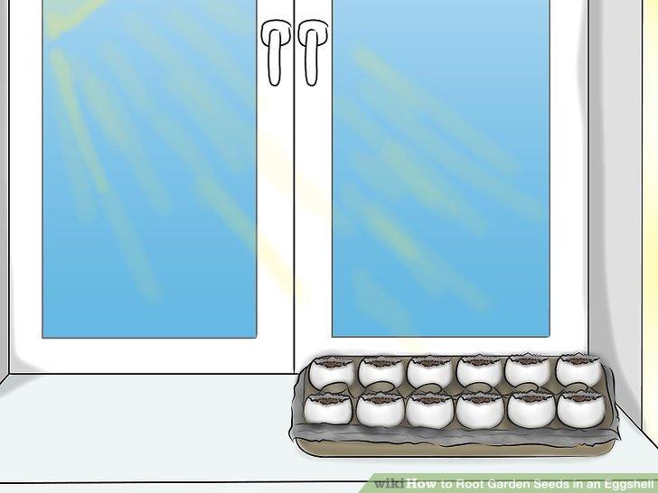 ریشه دار کردن بذر در پوست تخم مرغ 15