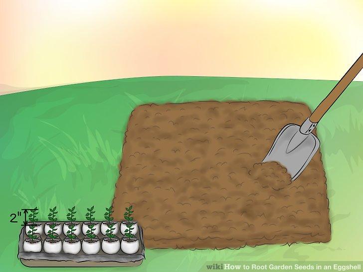 ریشه دار کردن بذر در پوست تخم مرغ 18