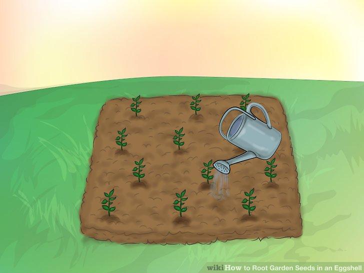 ریشه دار کردن بذر در پوست تخم مرغ 19