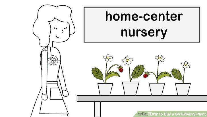 آموزش خرید گیاه توت فرنگی مرحله 10