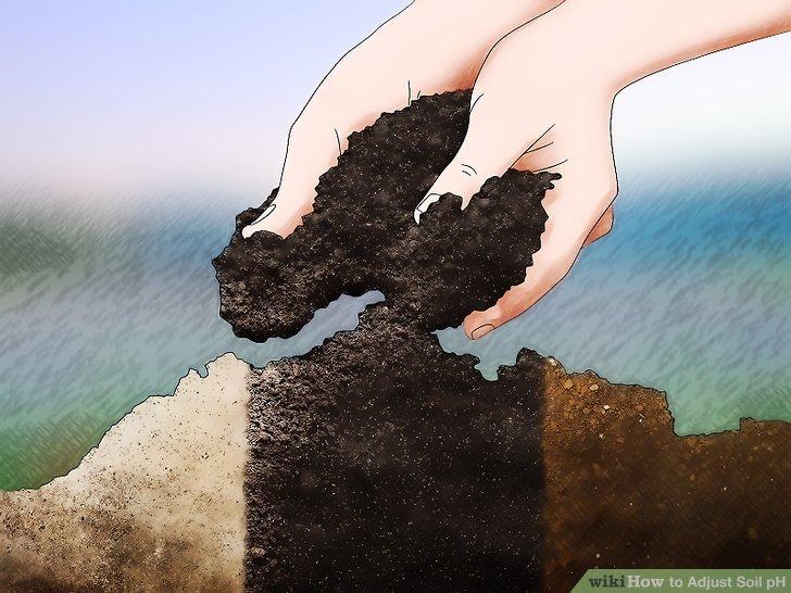 Image titled Adjust Soil pH Step 1