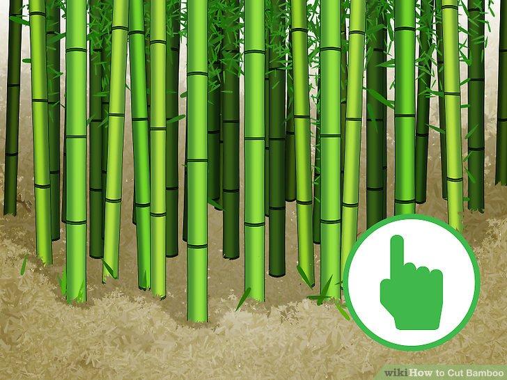 Image titled Cut Bamboo Step 1