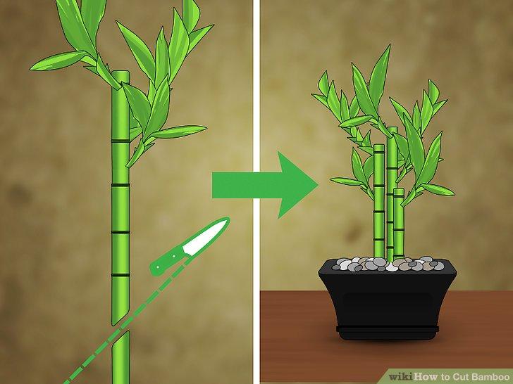 Image titled Cut Bamboo Step 5