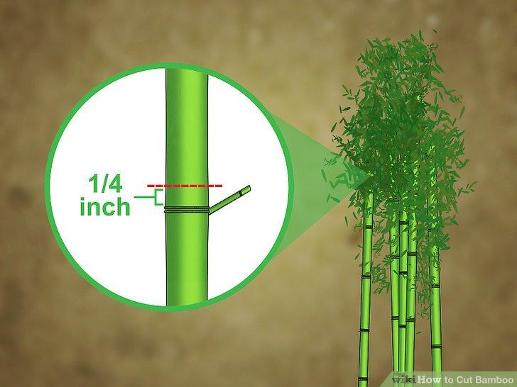 Image titled Cut Bamboo Step 7