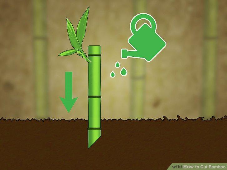 Image titled Cut Bamboo Step 9