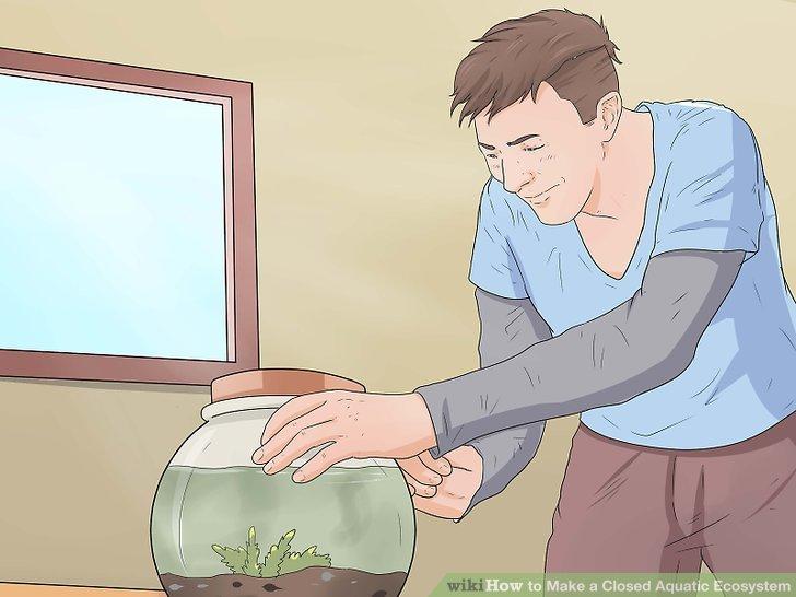آموزش ساخت تراریوم آبی مرحله 15