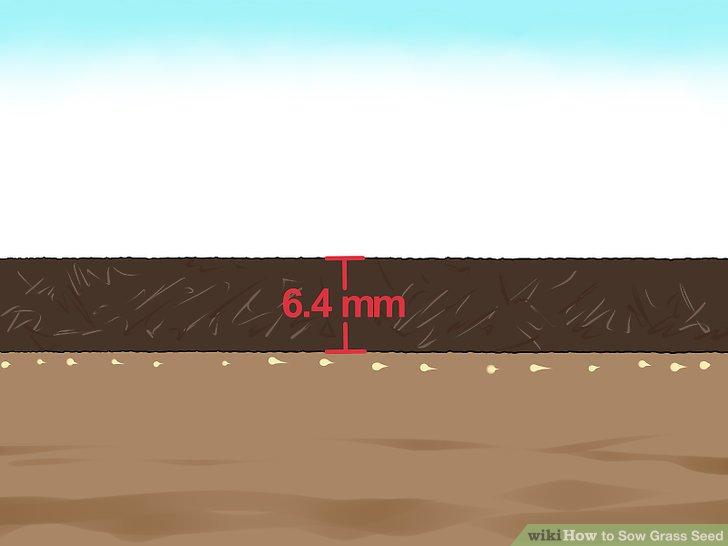آموزش کاشت چمن با بذر مرحله 10