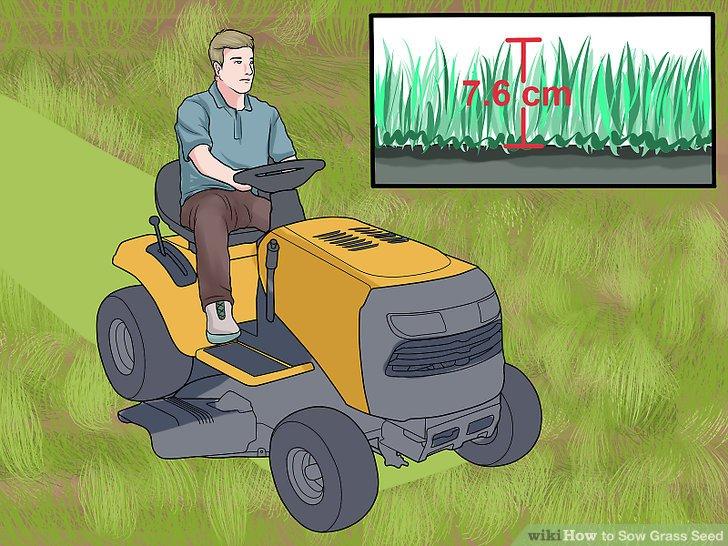 آموزش کاشت چمن با بذر مرحله 13