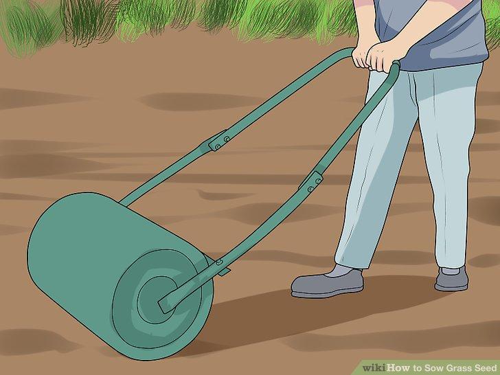 آموزش کاشت چمن با بذر مرحله 5