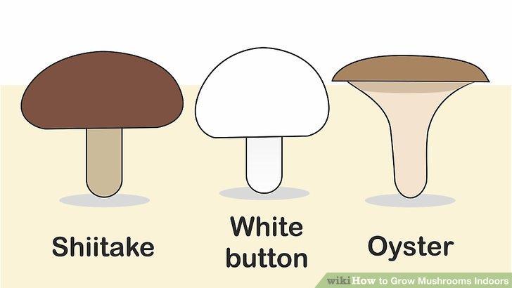 آموزش کاشت قارچ در خانه مرحله 1