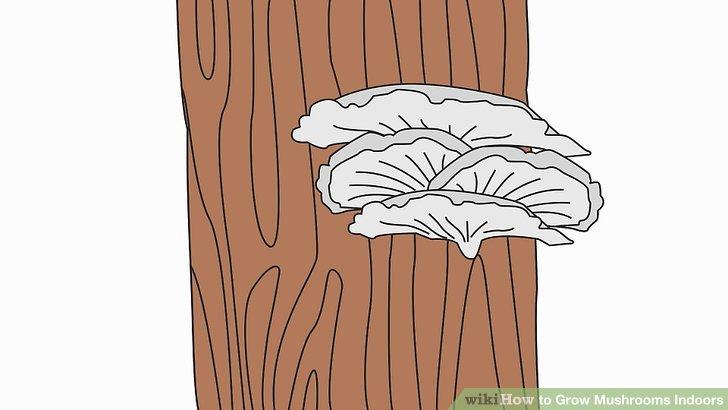 آموزش کاشت قارچ در خانه مرحله 14