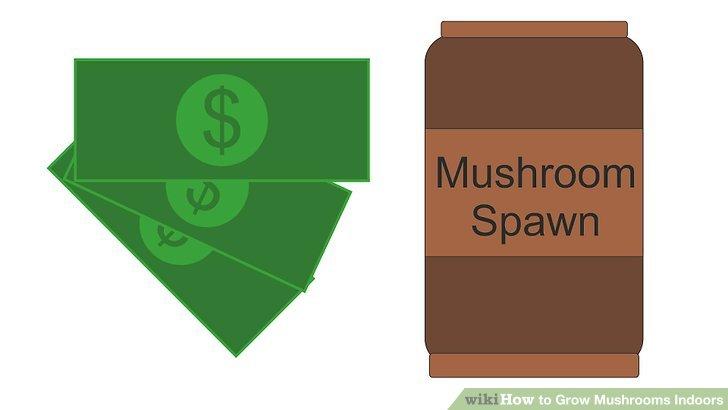 آموزش کاشت قارچ در خانه مرحله 2