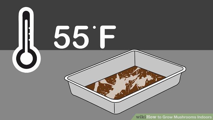 آموزش کاشت قارچ در خانه مرحله 5
