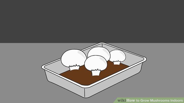 آموزش کاشت قارچ در خانه مرحله 6