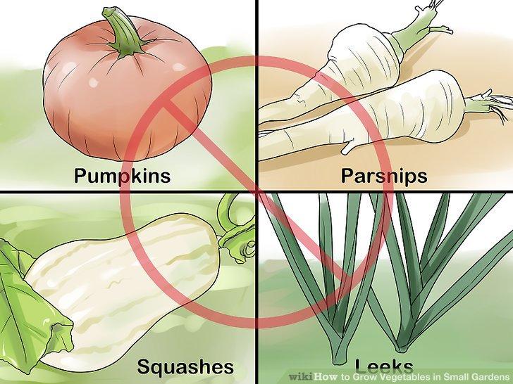 کاشت سبزيجات در باغهاي کوچک مرحله 2