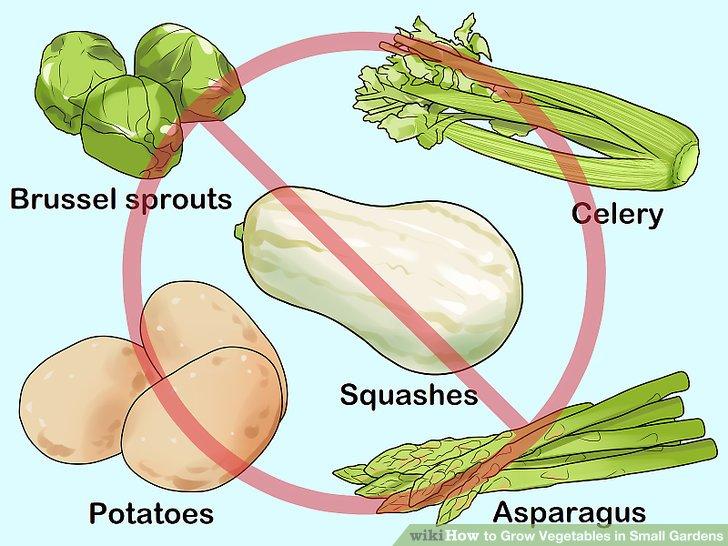 کاشت سبزيجات در باغهاي کوچک مرحله 3