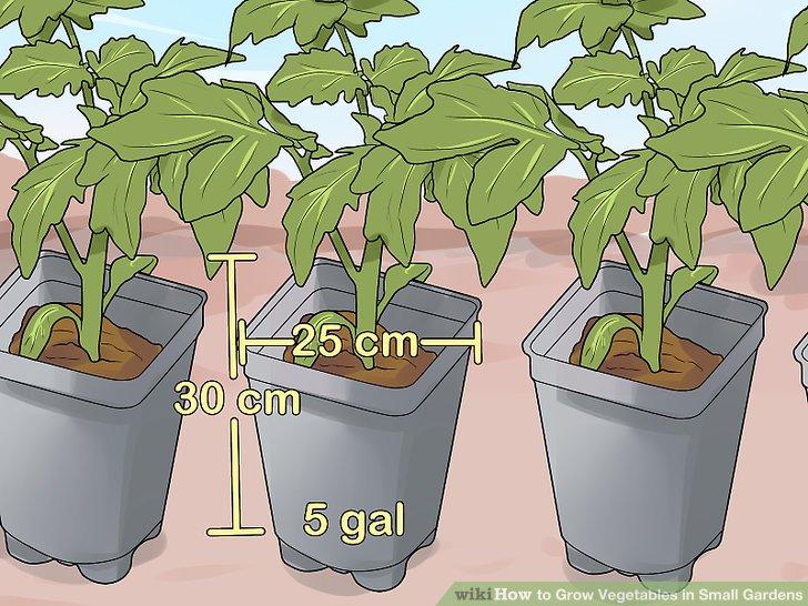 کاشت سبزيجات در باغهاي کوچک مرحله 9