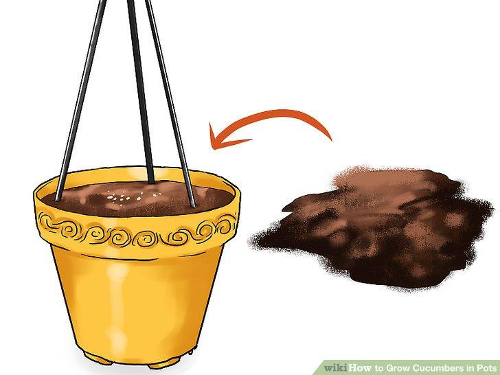آموزش کاشت خیار در گلدان مرحله 10