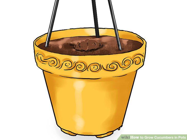 آموزش کاشت خیار در گلدان مرحله 14