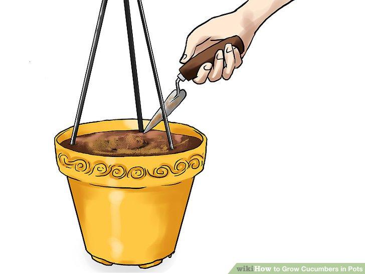 آموزش کاشت خیار در گلدان مرحله 16