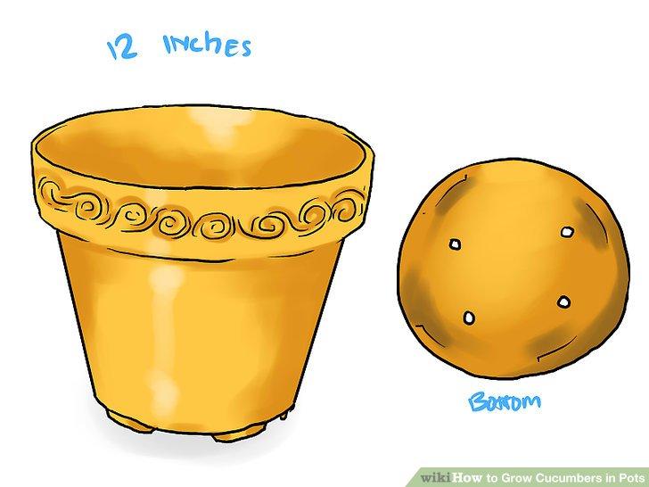 آموزش کاشت خیار در گلدان مرحله 3