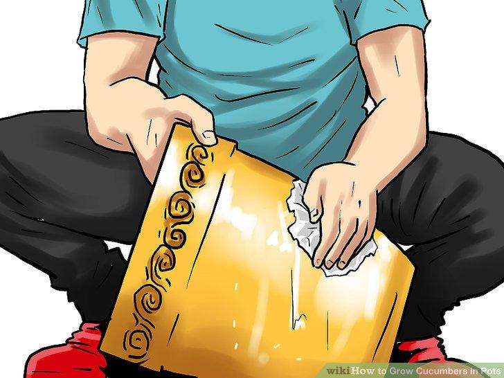 آموزش کاشت خیار در گلدان مرحله 4